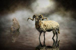 schilderij sheep