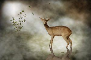 schilderij young deer